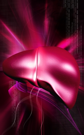 Digital illustration of  liver  in  colour  background  Stock Illustration - 14508973