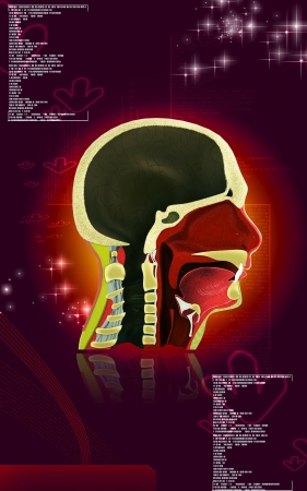 palate: Digital illustration of Pharynx in colour background