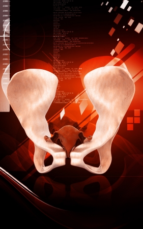 Digital illustration  of pelvic girdle in    colour background   Stock Illustration - 14592173