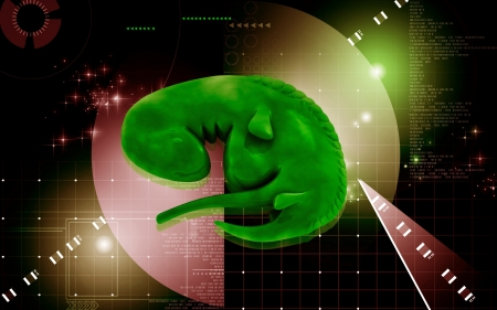 Digital illustration of Embryo  in colour background   illustration