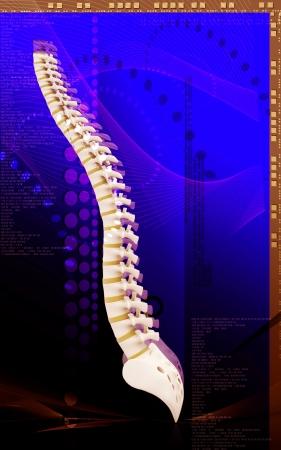 Digital illustration  of back bone in    colour background Stock Illustration - 15059908