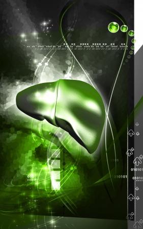 Digital illustration of  liver  in  colour  background Stock Illustration - 15299390
