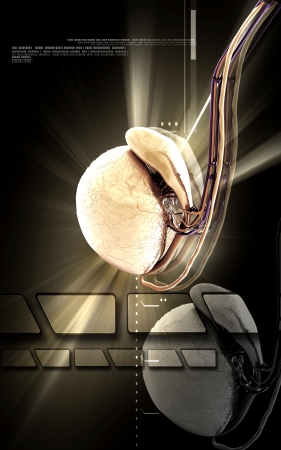 humamoid: Digital illustration   of Testicles in colour background  Stock Photo