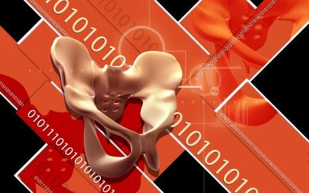 Digital illustration  of pelvic girdle in    colour background Stock Illustration - 20360226
