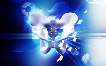 Digital illustration of pelvic girdle in colour background Stock Illustration - 20360046