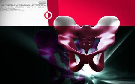 Digital illustration of pelvic girdle in colour background Stock Illustration - 20360045