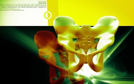 Digital illustration  of pelvic girdle in    colour background    Stock Photo