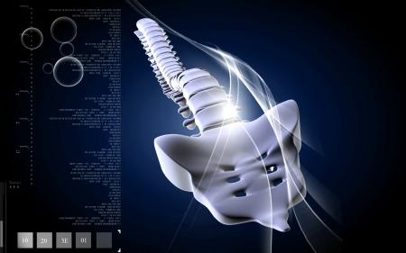 lumbar: Digital illustration  of back bone in    colour background