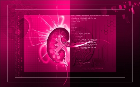 Digital illustration of  kidney in colour  background   illustration