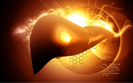 Digital illustration of  liver  in  colour  background Stock Illustration - 16515492