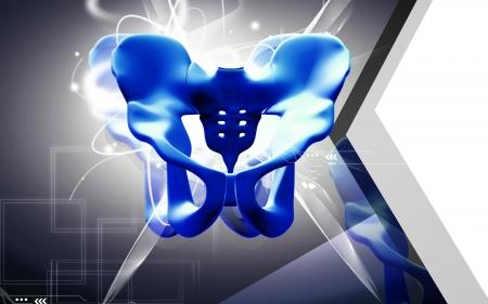Digital illustration  of pelvic girdle in    colour background Stock Illustration - 16559691