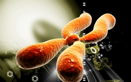 human chromosomes: Digital illustration  of chromosome in   colour background    Stock Photo