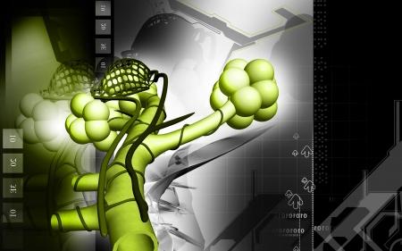 alveolos: Ilustraci�n digital de alv�olos en fondo de color Foto de archivo