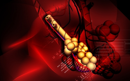 Digital illustration of  alveoli  in  colour  background  illustration