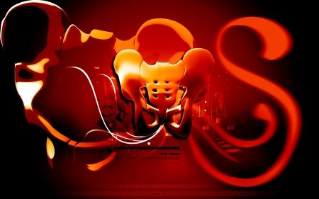 Digital illustration  of pelvic girdle in    colour background Stock Illustration - 17104380