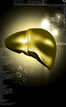 Digital illustration of  liver  in  colour  background Stock Illustration - 17213178