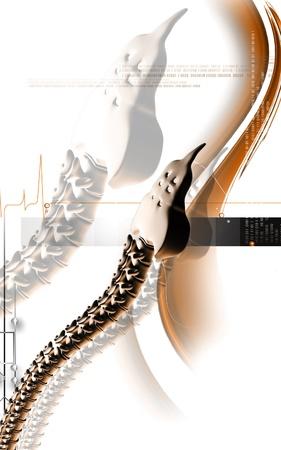 dorsal: Digital illustration  of back bone in    colour background