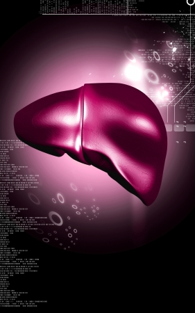 Digital illustration of  liver  in  colour  background Stock Illustration - 17253960