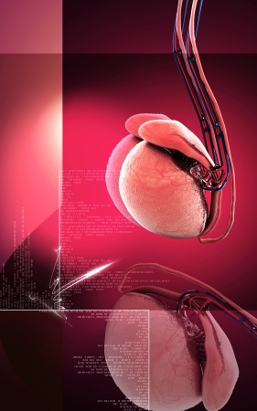 Digital illustration of  testicles in colour  background Stock Illustration - 17253977