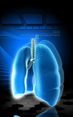 gullet: Ilustraci�n digital de pulmones humanos en fondo de color Foto de archivo