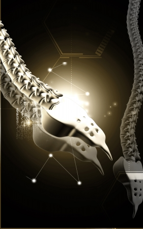 Digital illustration  of back bone in    colour background Stock Illustration - 17338587