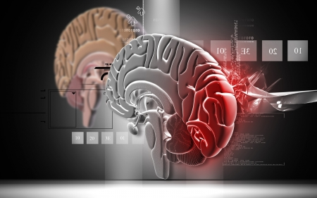 oblongata: Brain Digital illustration of  brain in colour  background   Stock Photo
