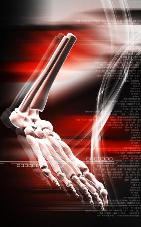 Digital illustration of Leg bone in colour background