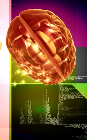 thalamus: Digital illustration of  brain in colour  background   Stock Photo