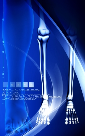 Digital illustration   of Leg bone in colour background  illustration