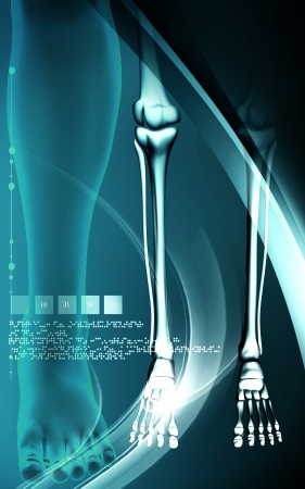 bones of the foot: Digital illustration   of Leg bone in colour background