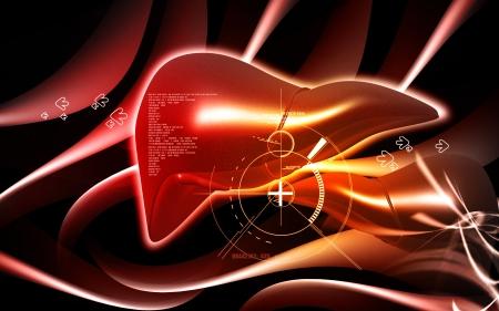 Digital illustration of  liver  in  colour  background   illustration