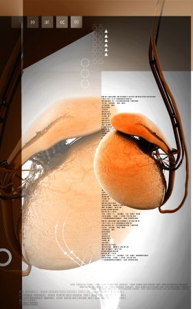 Digital illustration of  testicles in colour  background  Stock Illustration - 17983597