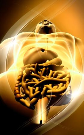 Digital illustration of large intestine in colour background Stock Illustration - 18121415