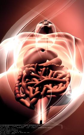 Digital illustration of large intestine in colour background Stock Illustration - 18121420