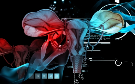 female reproductive organ: Digital illustration of  Uterus  in  colour  background