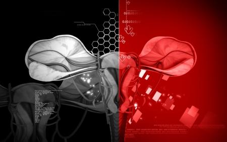 endometrial: Digital illustration of  Uterus  in  colour  background
