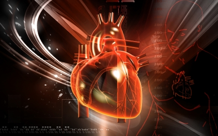 anatomy heart: Digital illustration of  heart  in  colour  background