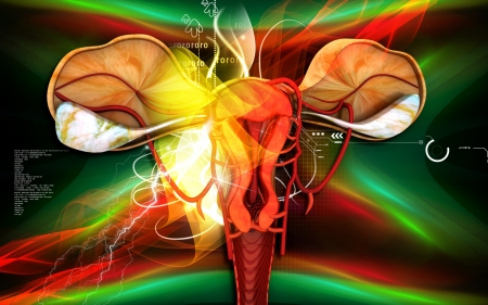 Digital illustration of  Uterus  in  colour  background Stock Illustration - 18568146