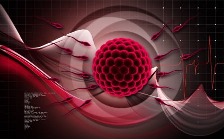 Digital illustration of sperm and egg in colour background  3D illustration