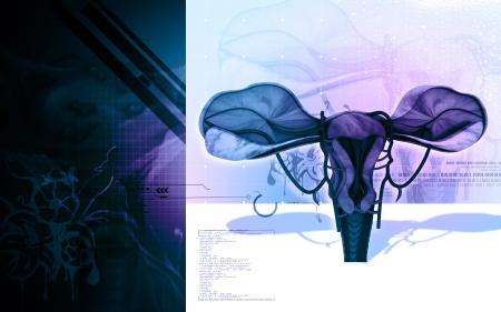 endometrial: Ilustraci�n digital de �tero en el color de fondo