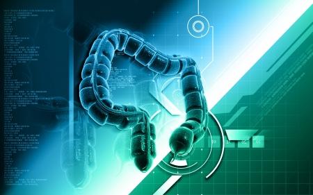 Digital illustration of large intestine in colour background Stock Illustration - 20353781