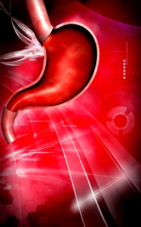 Digital illustration of  stomach  in colour  background   Stock Photo