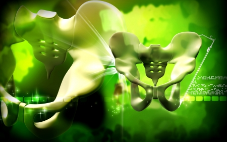pubis: Digital illustration  of pelvic girdle in    colour background    Stock Photo