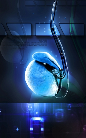 Digital illustration of  testicles in colour  background