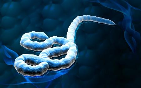 Digital illustration of Ebola virus in   colour background
