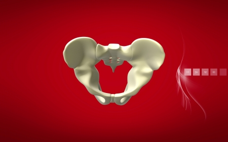 Digital illustration  of pelvic girdle in    colour background    illustration