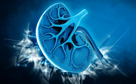 Digital illustration of kidney in colour background  Stock Illustration - 20781027