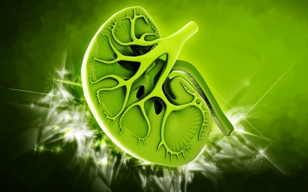 medical technology background: Digital illustration of kidney in colour background   Stock Photo
