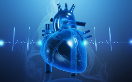 human heart: Digital illustration of  heart  in  colour  background