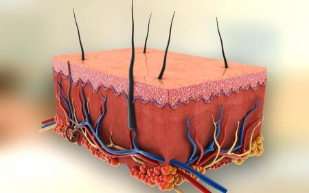 Digital illustration of Skin in colour background